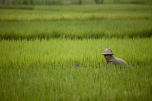 rural-life_1