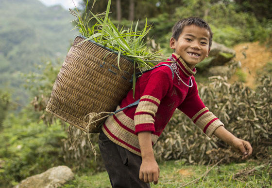 A H'mong boy carries grass to feed his buffalo.